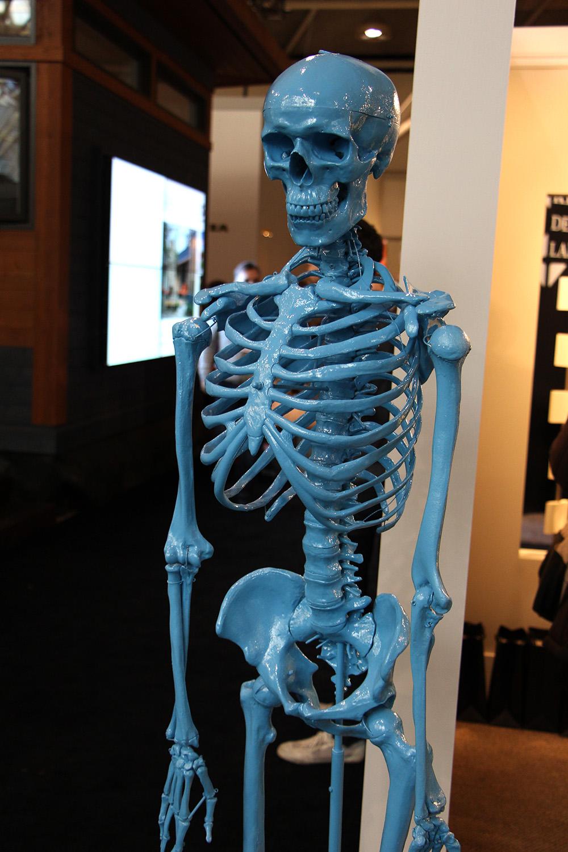blue skeleton