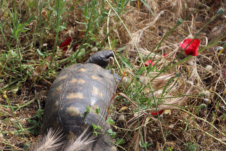tortoise athens