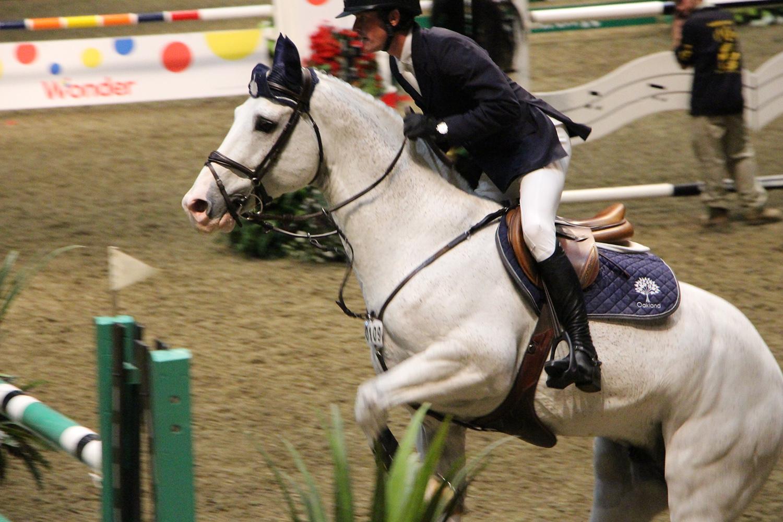 royal winter fair horse show 4