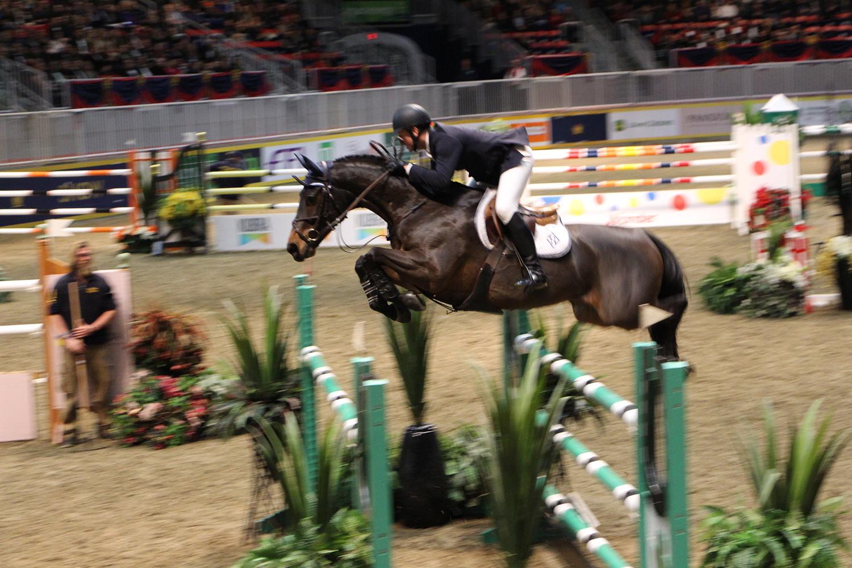 royal winter fair horse show 8