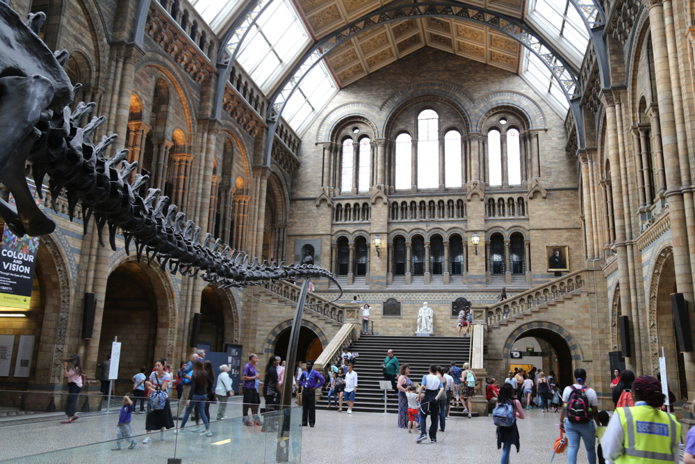 museums in london natural history museum dinosaurs