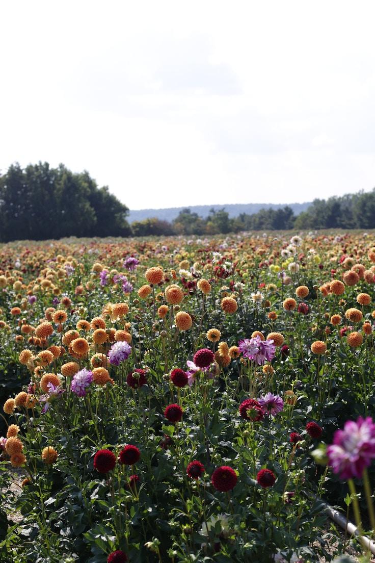 Andrews scenic acres (8 of 12)