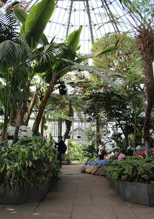 allan gardens palms