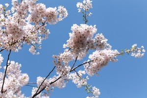 cherry blossom print dress (10 of 11)