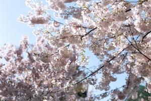 cherry blossom print dress (11 of 11)