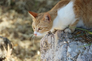 greek cat in ruins