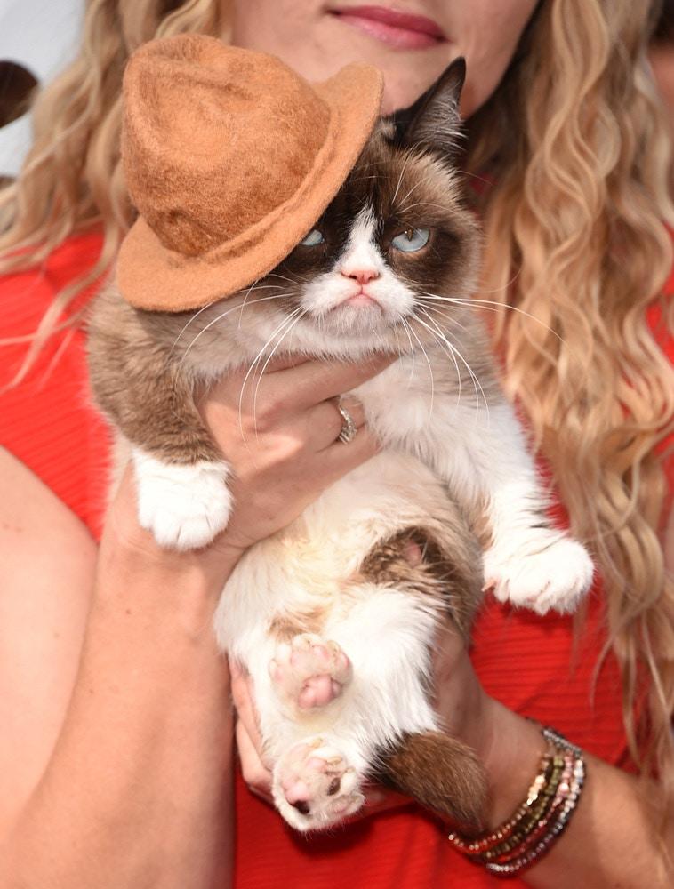 grumpy cat 2014 mtv movie awards