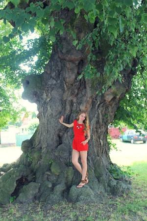 large linden tree
