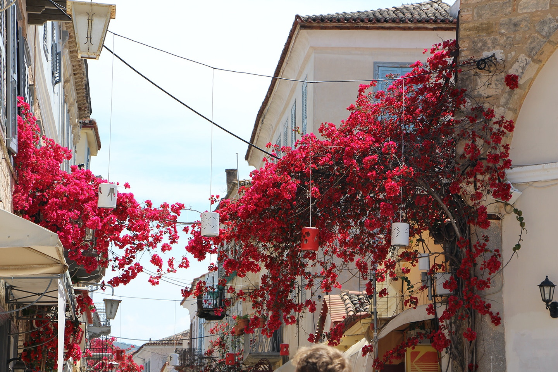 nafplio greece azalea flowers in town