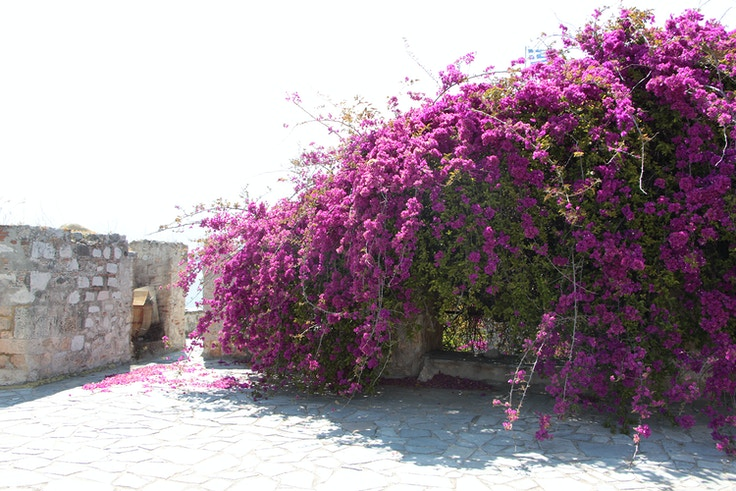 nafplio greece bourtzi azaleas