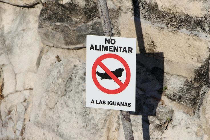 no alimentar a las iguanas