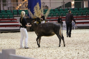 royal winter fair 6
