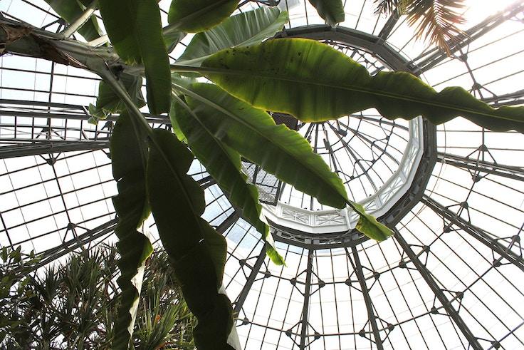the palm room allan gardens toronto