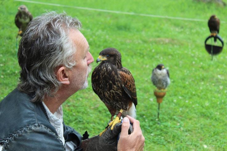 zvikov falconer