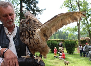 zvikov owl