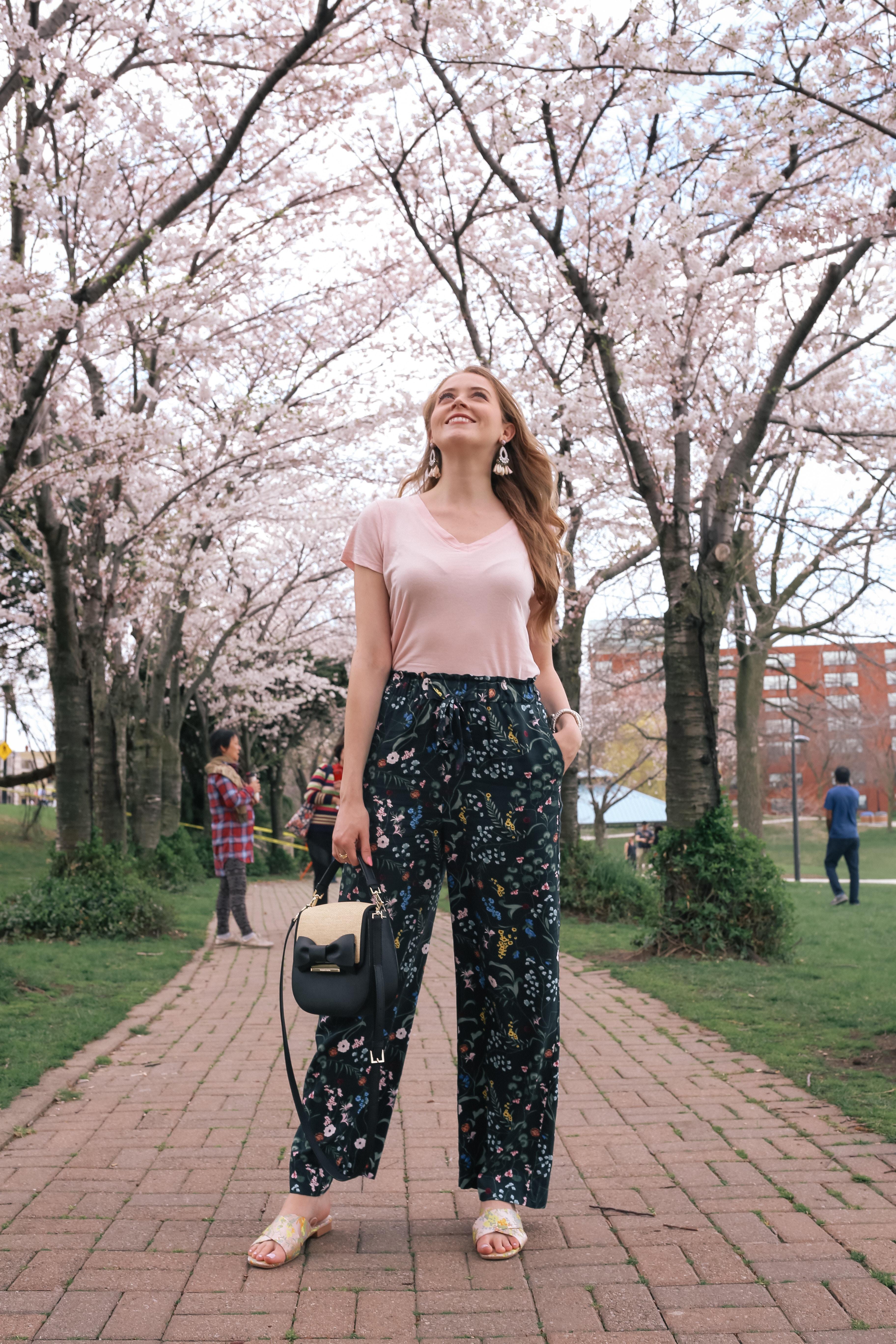 cherry blossoms in burlington