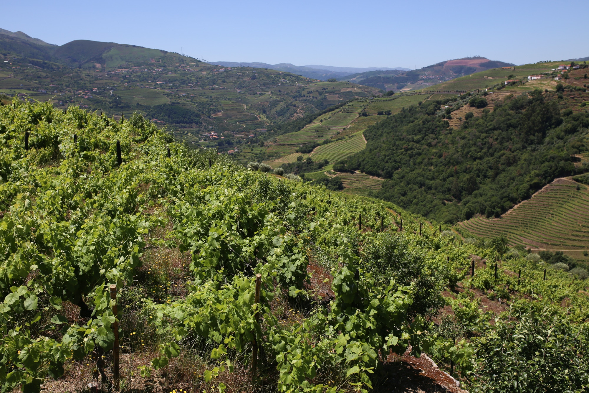views from Casa das Torres de Oliveira Douro Valley