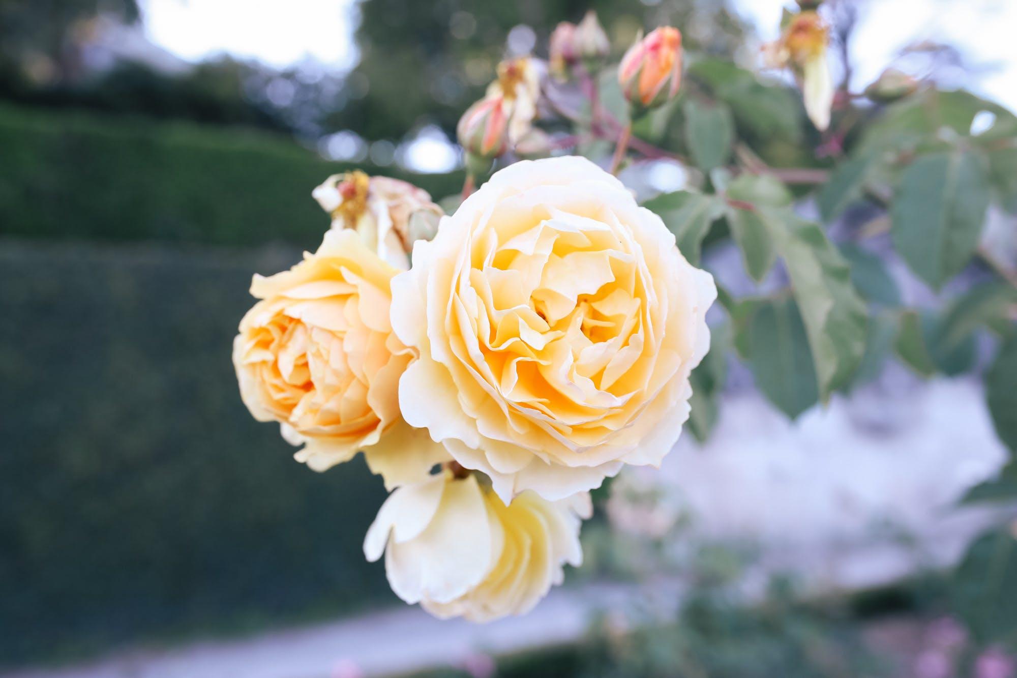 rose garden palacio de cristal