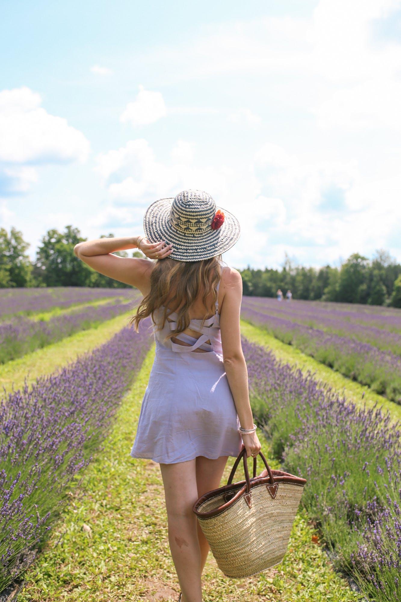 Lavender Fields near Toronto | Free Lightroom Preset Download