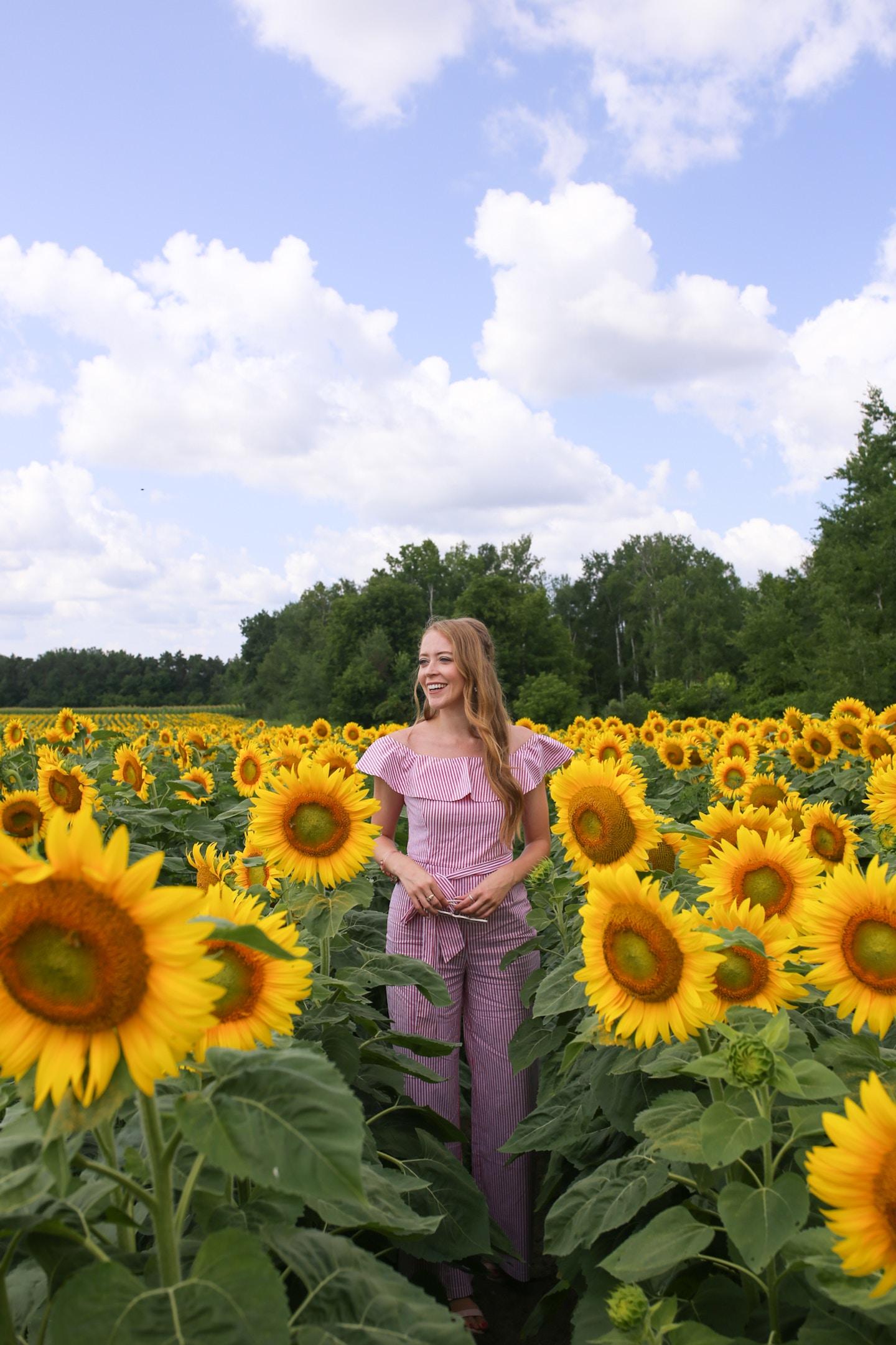 sunflower fields near toronto that are still open in august 2018