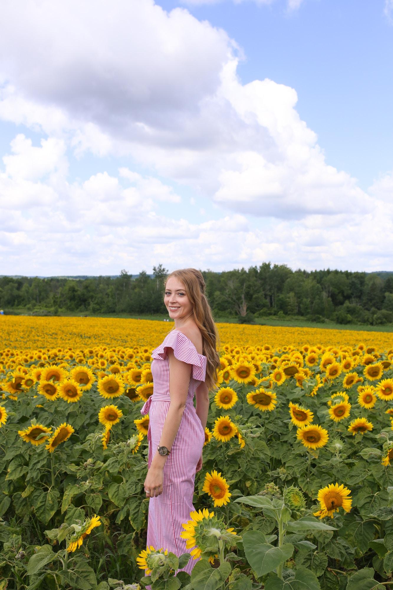 sunflower fields near toronto that are still open
