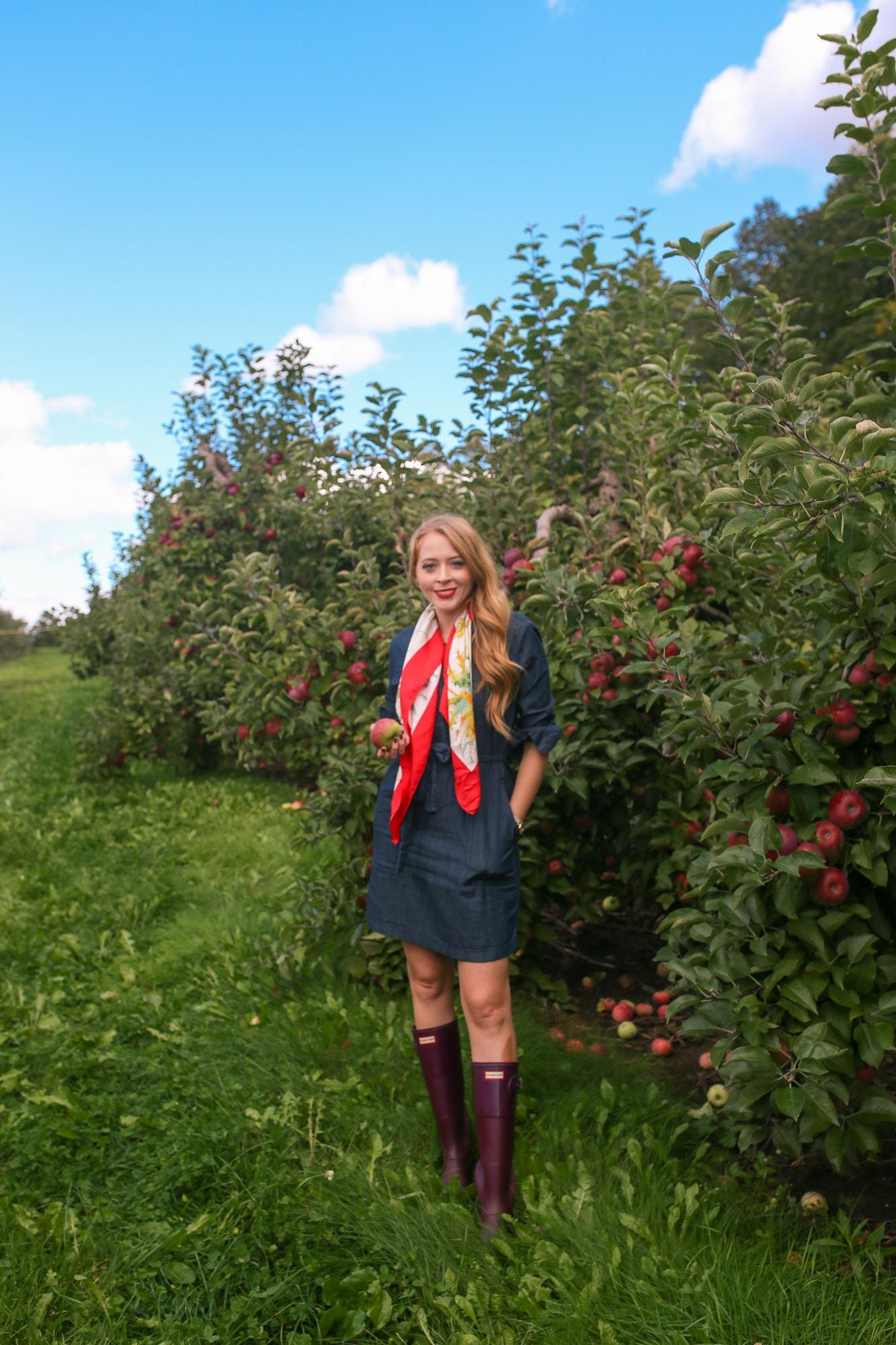 Apple picking outfit idea: Tall Hunter boots, Joe Fresh denim dress, vintage Gucci silk flora print scarf