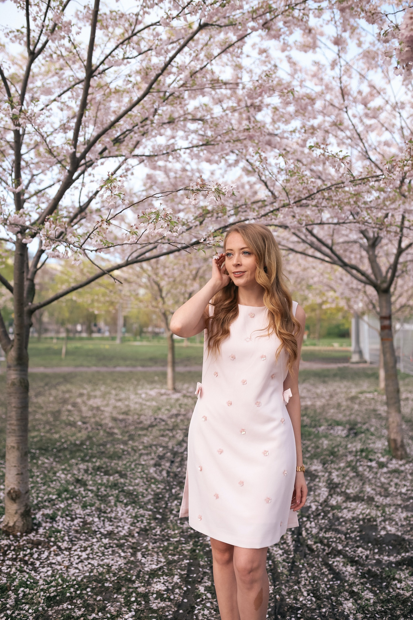 Cherry Blossoms in Trinity Bellwoods Park Ted Baker Dress